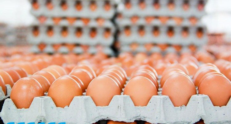 سعر كرتونة البيض